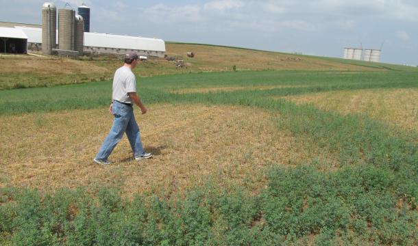 Person walking through crop-lines